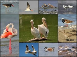 BIRDS-OF-GUJARAT