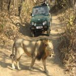 Gujarat Wildlife Tour Packages